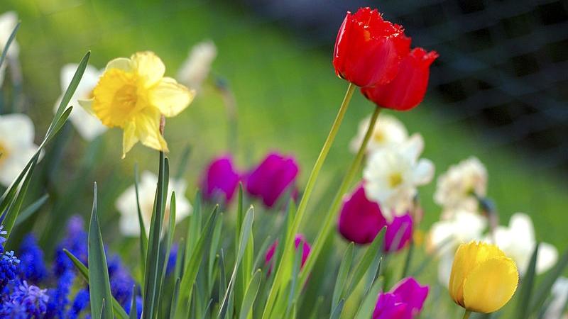 Refranes de primavera