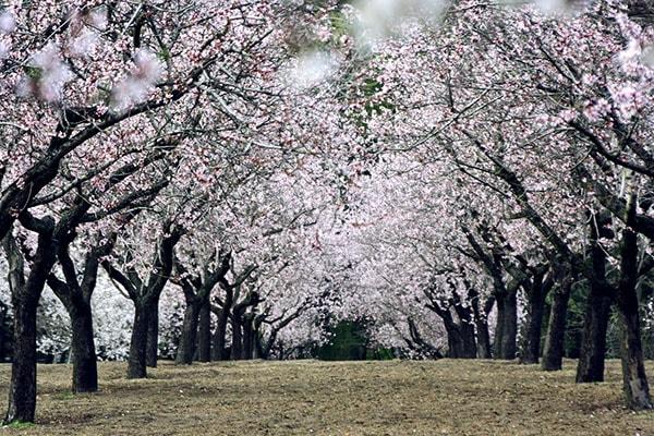 Parque Quinta de los Molinos Sitios en Madrid para disfrutar de la primavera
